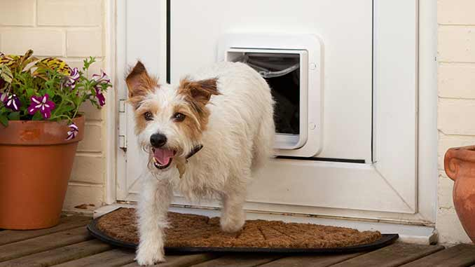 Choosing a pet door.