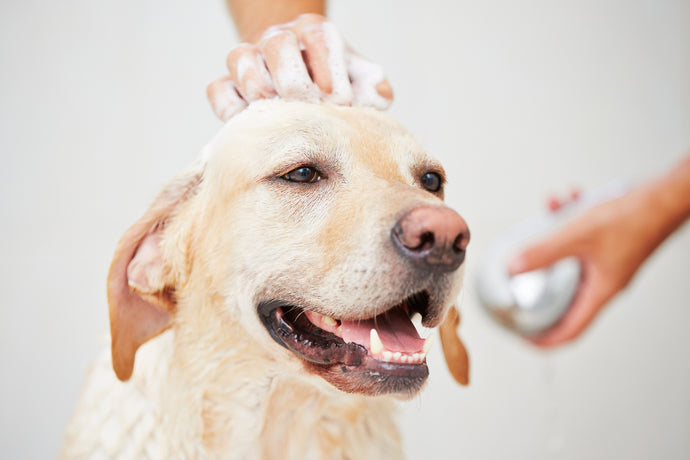 The best way to overcome shedding in your pet.