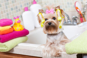 3 Essentials you need to know for a well-groomed pet!