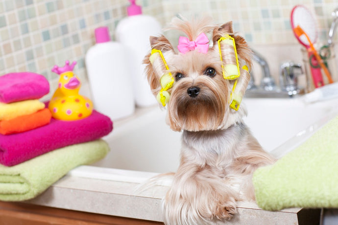 3 Essentials you need to know for a well-groomed pet