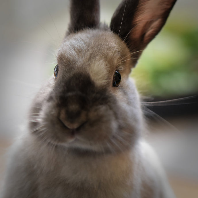 Fun Facts about Rabbits!