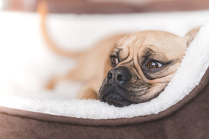 Top Tips To Ensure your Pet gets a Good Night's Sleep