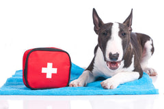 Pack your pets medication in a carry bag or box in the event of a bushfire