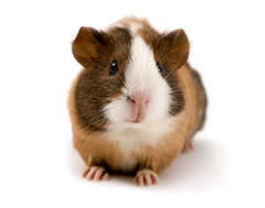 Small Animal products. We Know Pets online shop