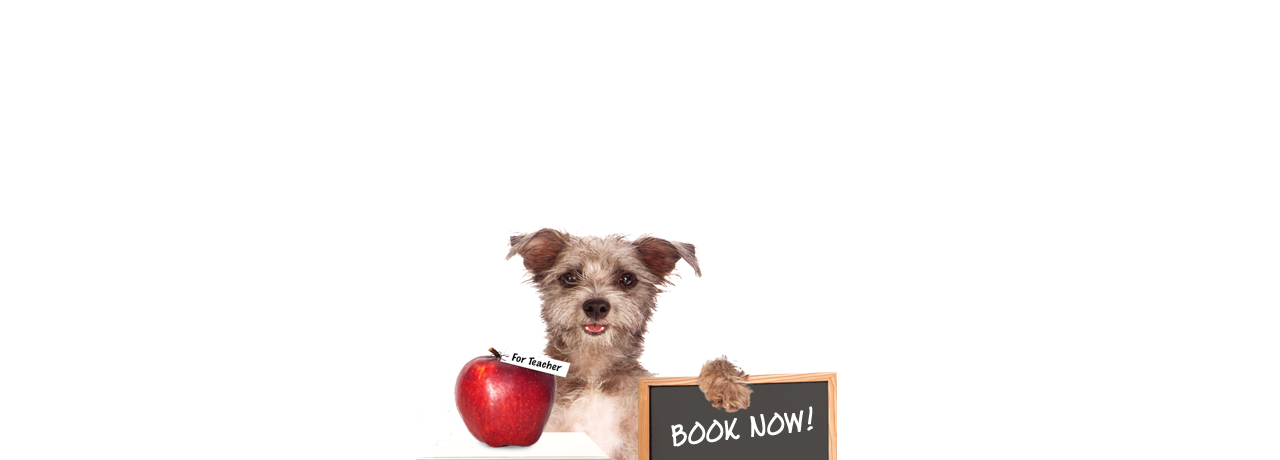 We Know Pets Puppy Preschool. Bookings Essential!
