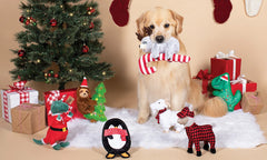 Spoil your Pet this Christmas!