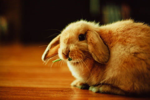 10 Fun Facts about Rabbits - We Know Pets!