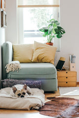 Keep indoor plants well out of your pets reach!