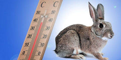 How to keep rabbits cool in heat