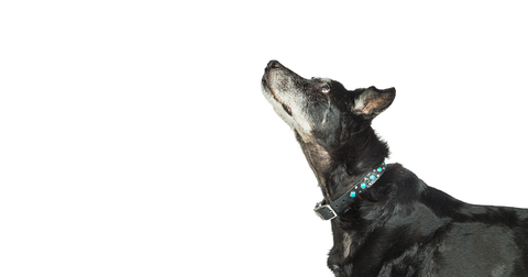 Senior dogs have special requirements