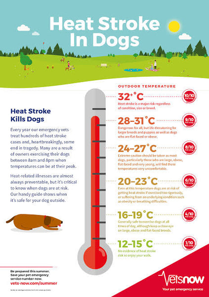 Too hot to walk your dog? Check out this chart before setting off.
