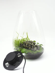"Bioscape Terrarium 175 Rounded ""The Bridge"""