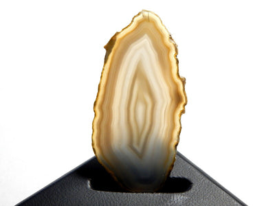 Brown and White Brazilian Agate Slice Gemstone UnDrilled Pendant for Display or Wire Wrapping (N3-INDOC80)