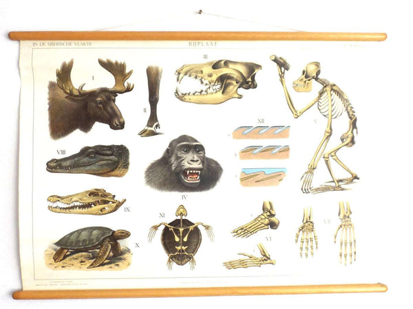 UpperDutch:School Chart,Pull Down Chart, School Chart. Anatomical Borneo - Siberia - Wildlife Pull Down Chart. Turtle, crocodile, Monkey. Animal World