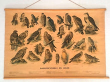 UpperDutch:School Chart,Birds of prey school chart, vintage bird school plate. Different kind of birds: owls, falcons. Biology animal school chart.