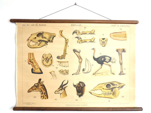 UpperDutch:School Chart,Pull down Chart School chart Antique 1930s Anatomical Kalahari Dessert Animals Pull Down Chart Giraffe,Ostrich, Wildebeest, gnus