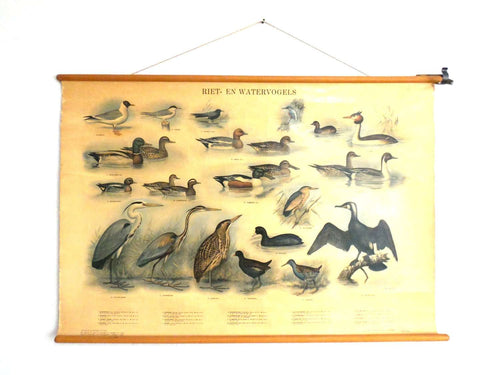 UpperDutch:School Chart,School Chart. Antique Waterbirds - Waterfowl Pull Down Chart. Birds, cormorant, kingfisher, blue heron, duck.