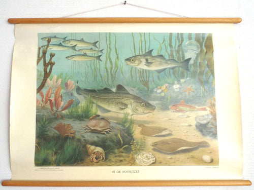 UpperDutch:School Chart,Pull Down Chart  Vintage Zoological Pull down school chart 'The North Sea', School chart, Fish, Scenery.