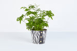 Load image into Gallery viewer, Zebra Pot Cover