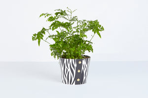 Zebra Pot Cover