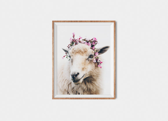 Faroese Sheep Fine Art Print Floral