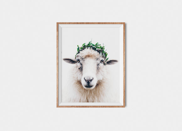 Faroese Sheep Fine Art Print Bambi Winter