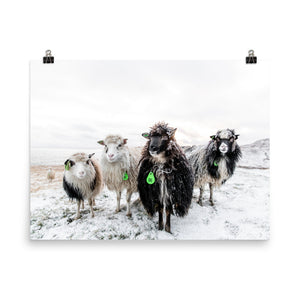 Limited Edition Fine Art Print - Sheep Band