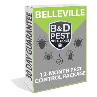 Belleville 12-Month Pest Control Package (12-Month Guarantee)