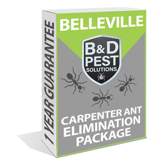 Belleville Carpenter Ant Elimination Package (1 Year Guarantee)