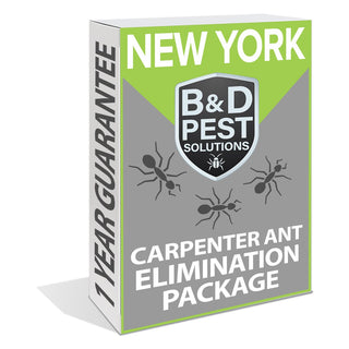 New York Carpenter Ant Elimination Package (1 Year Guarantee)