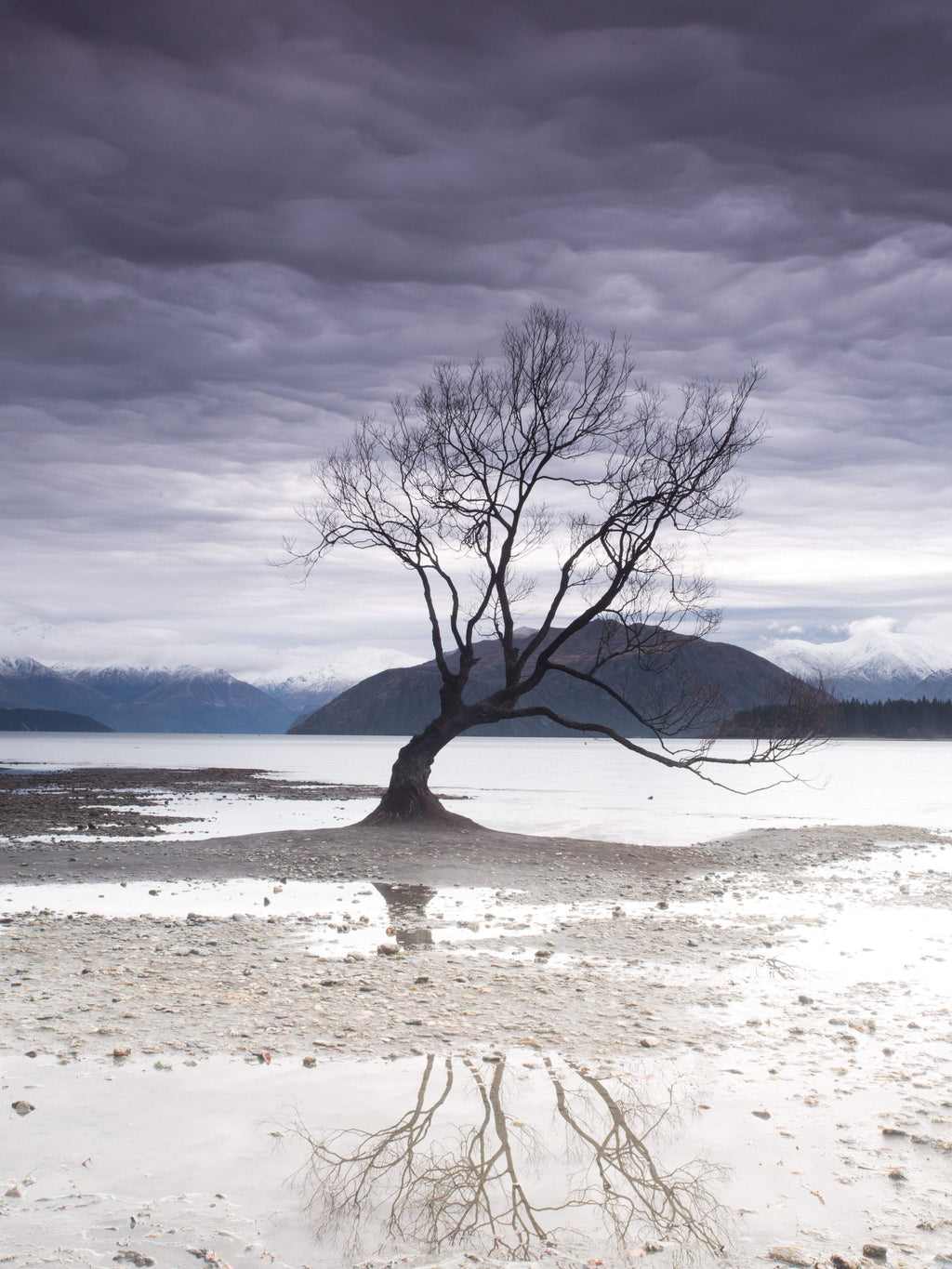 Coastal Collections Co Print Wanaka Tree Print