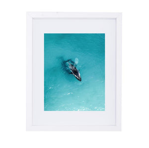 Coastal Collections Co Print Whale Watching Print