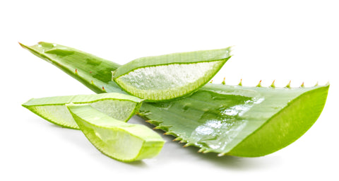 aloe vera plant cut to reveal aloe gel inside