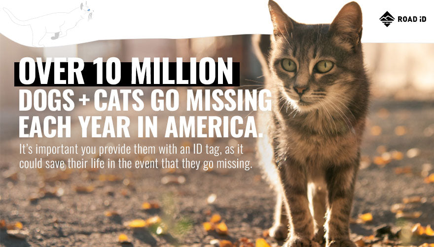 10 million dogs and cats missing each year