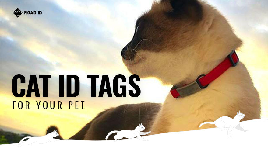 cat id tags for your pet