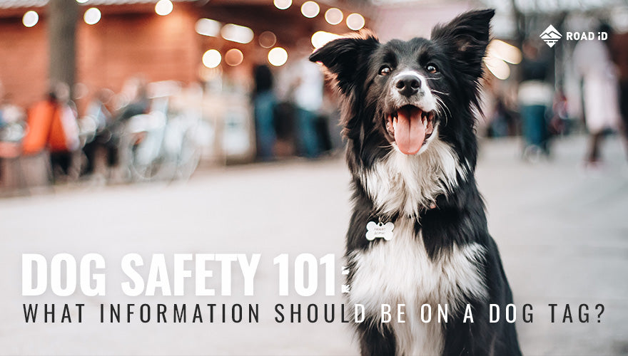 Dog Safety 101 What Information Should Be on a Dog Tag