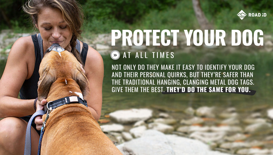 protect your dog at all times