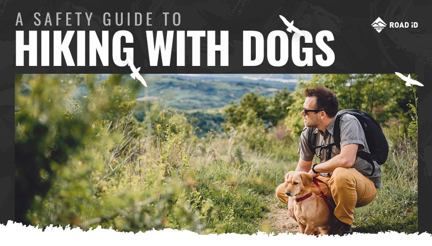 A Safety Guide to Hiking with Dogs