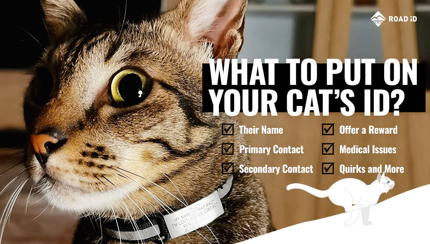 what to put on your cats id