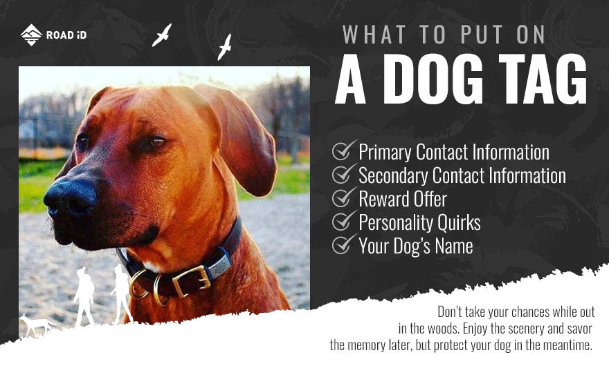 What to put on a dog tag