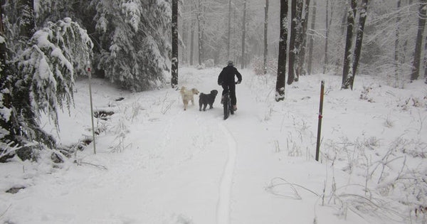 Remi, Cotton, and owner Randy in the snow