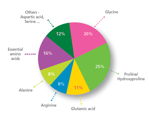 gracie whey collagen amino profile