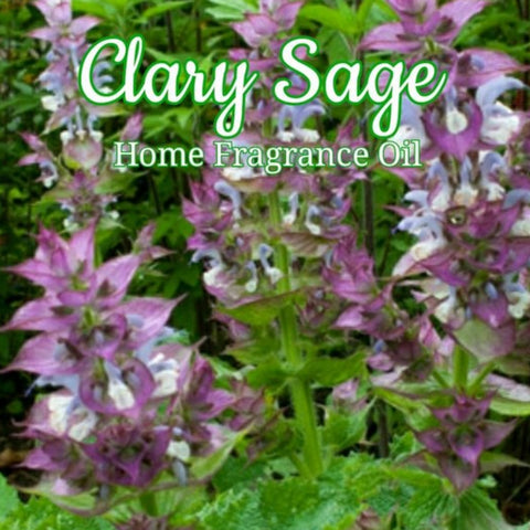 Clary Sage Home Fragrance Diffuser Warmer Aromatherapy Burning Oil