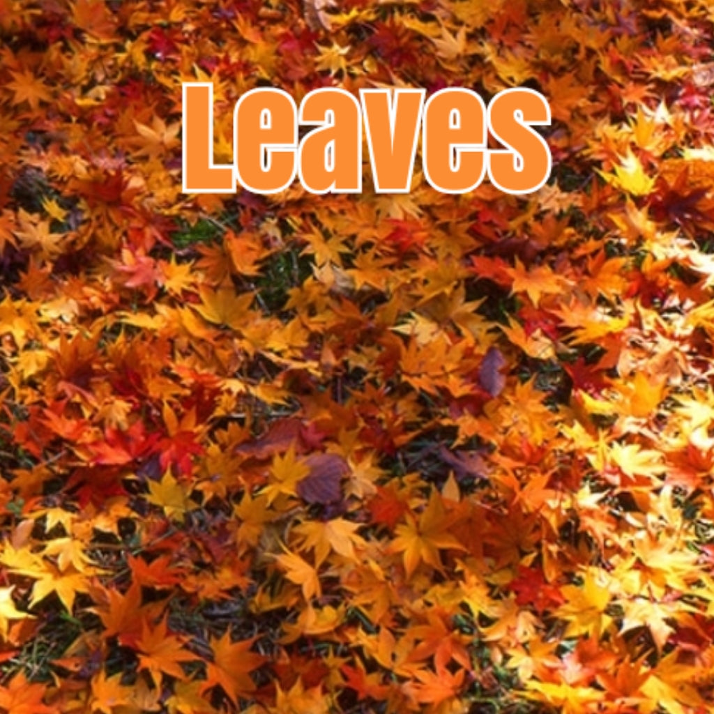 Leaves (Type) Candle/Bath/Body Fragrance Oil