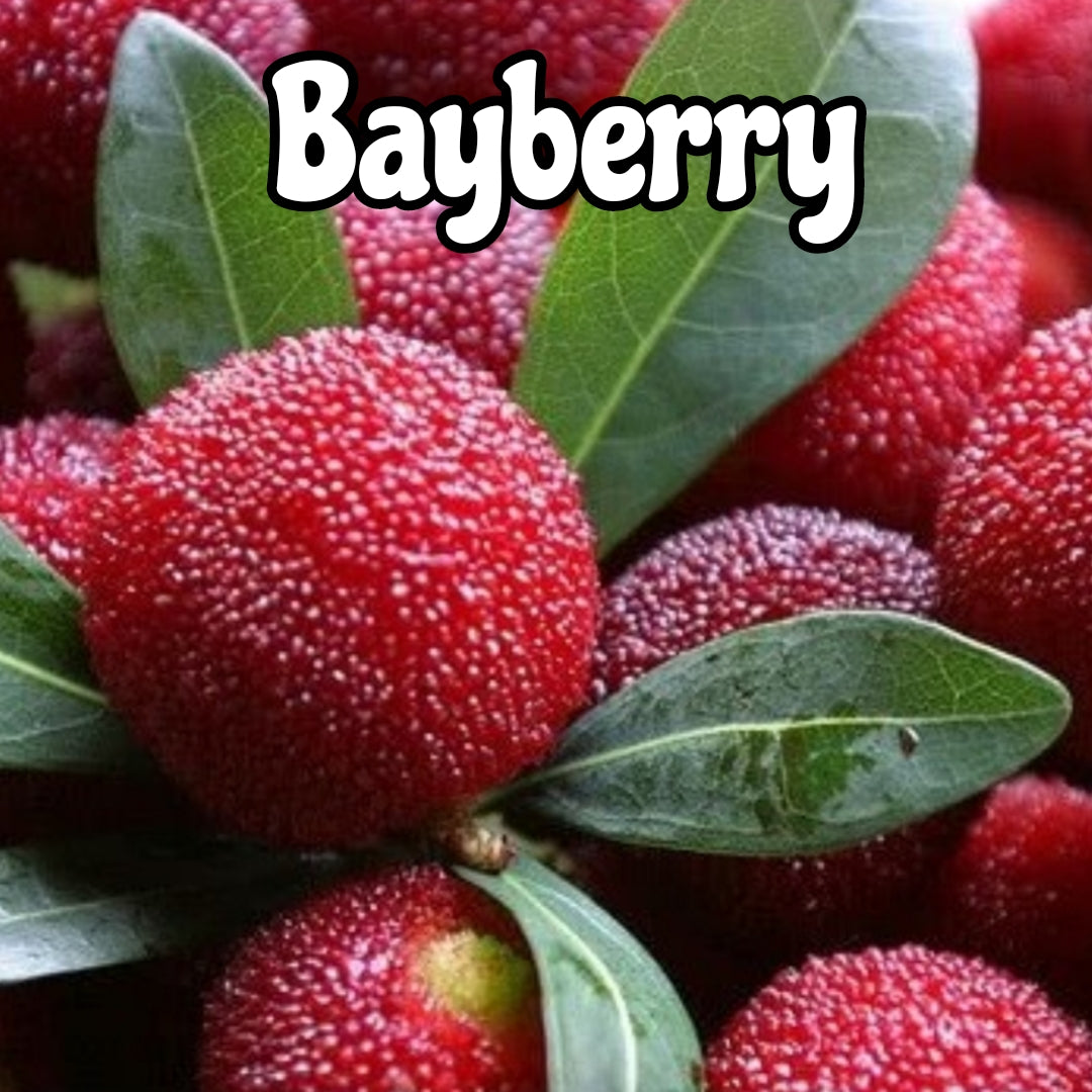 Bayberry Candle/Bath/Body Fragrance Oil