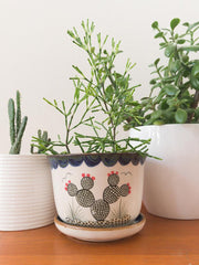 Cactus Planter With Tray