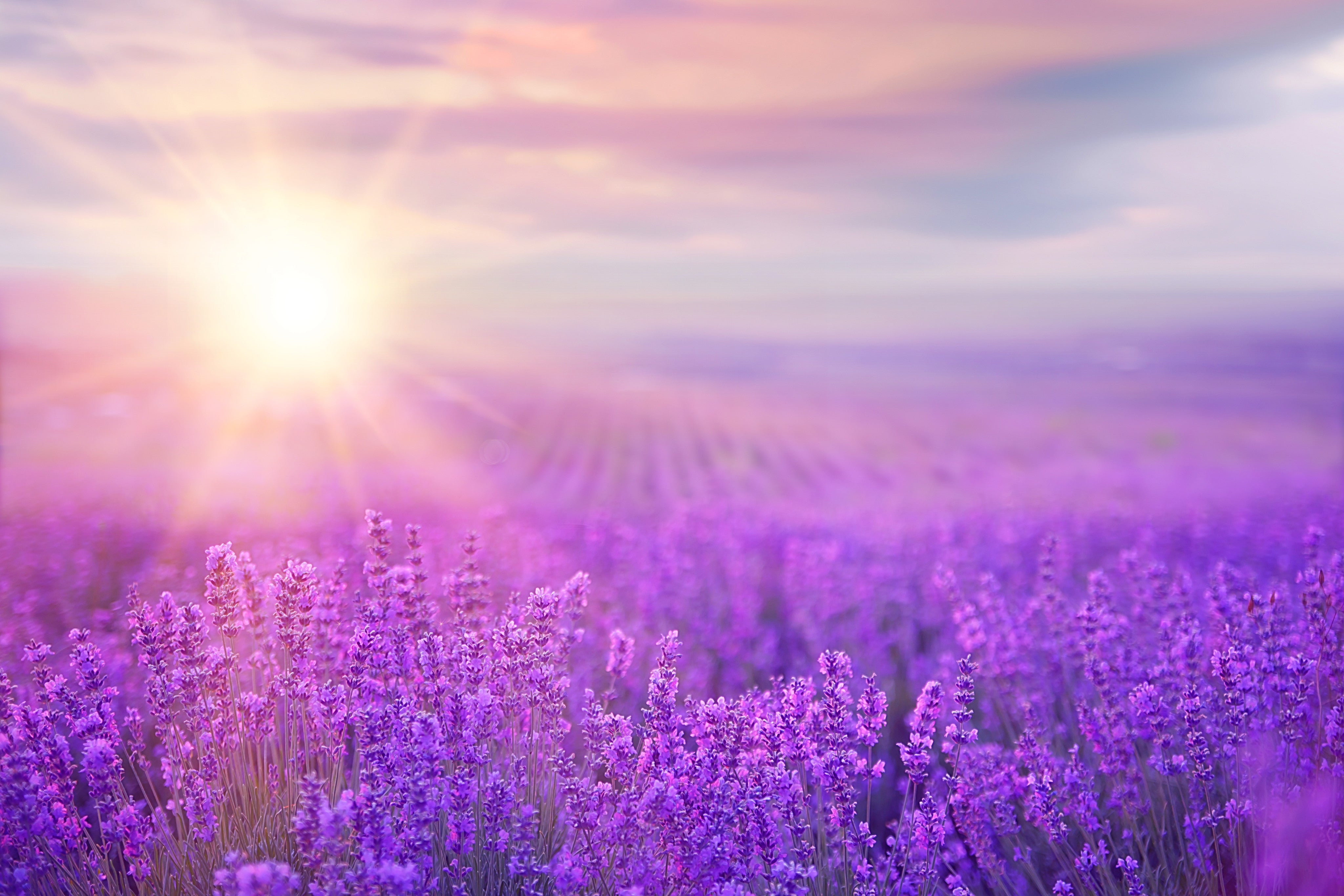 What's Behind Your Carole's Candle? The Benefits of Aromatherapy (Lavender)