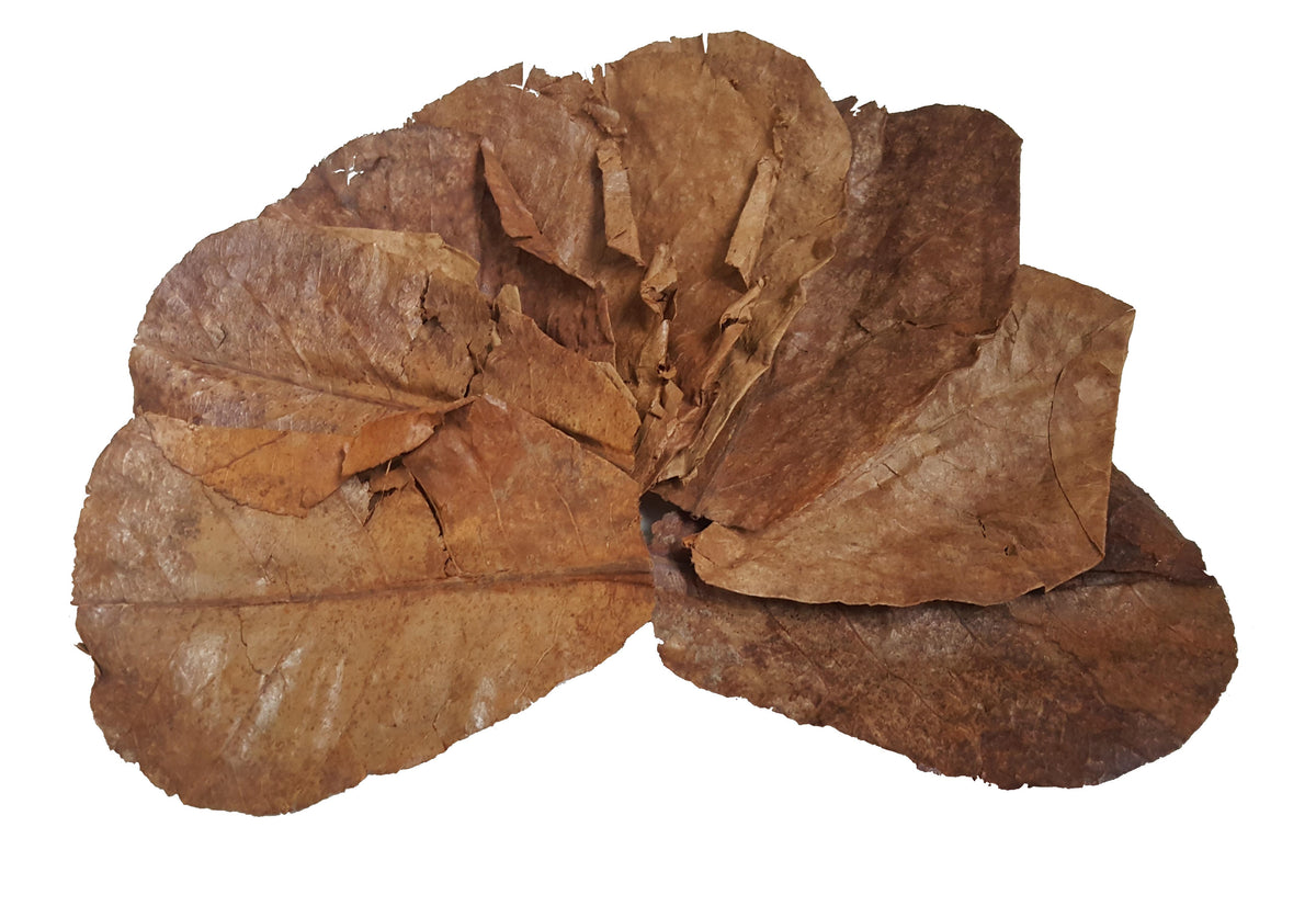 10x Indian Almond Leaves-Consumables-Sydney Aquascapes