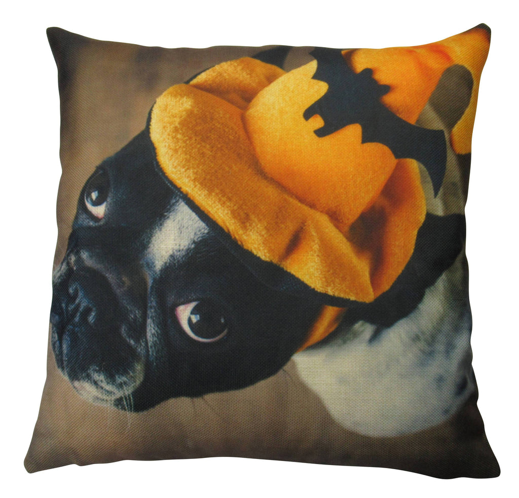 French Bulldog with Halloween Hat on White