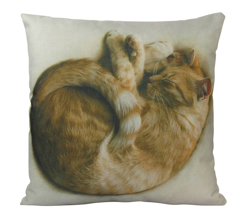 Snugly Sleeping Cat on White